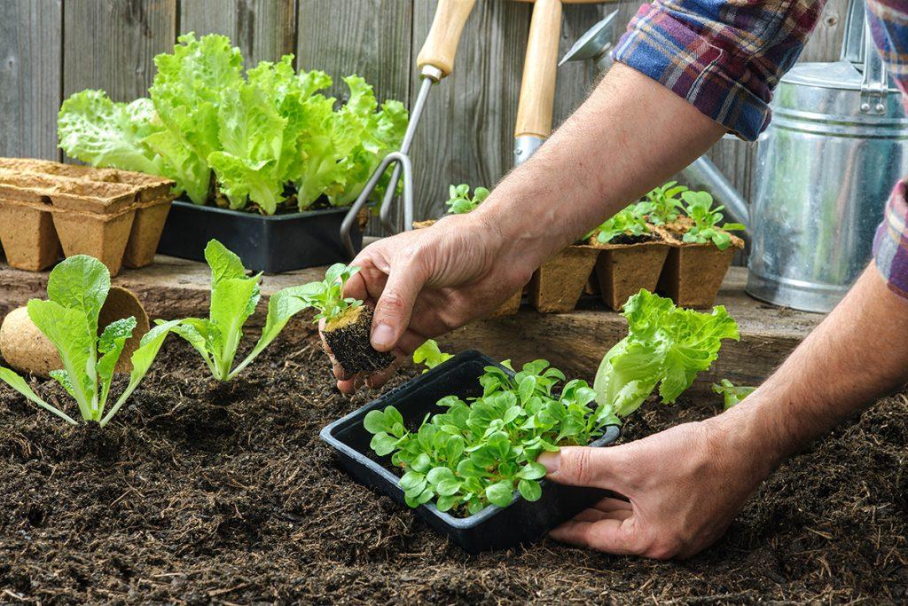 Posadimo sadike v vrt