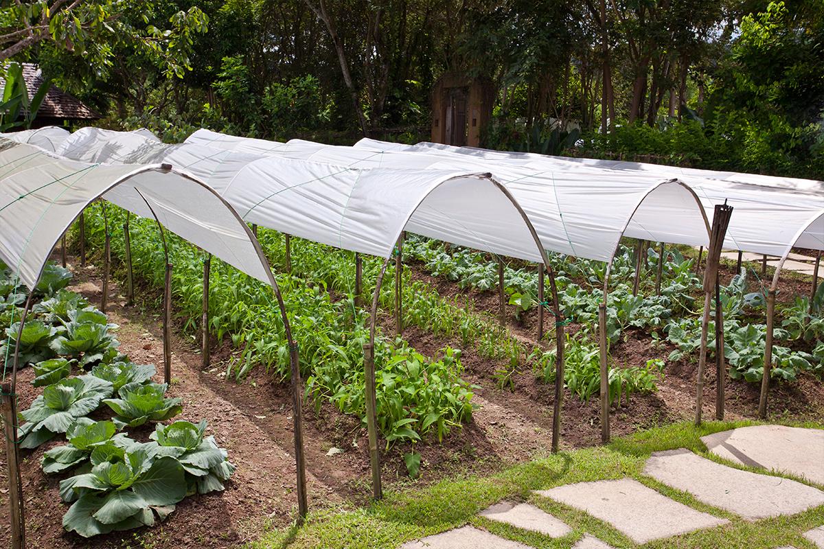 Prekrivanje zelenjavnega vrta z loki in kopreno